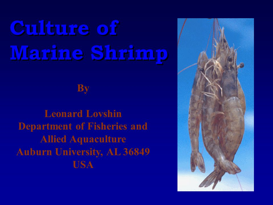 Culture of Marine Shrimp Culture of Marine Shrimp By Leonard Lovshin Department of Fisheries and Allied Aquaculture Auburn University, AL 36849 USA