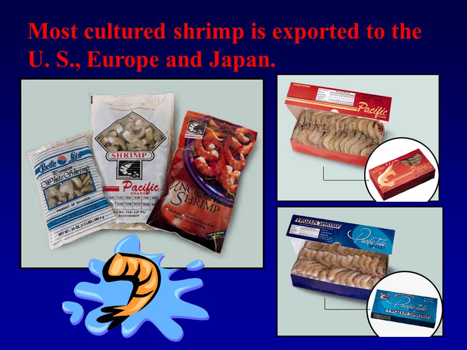 Most cultured shrimp is exported to the U. S., Europe and Japan.