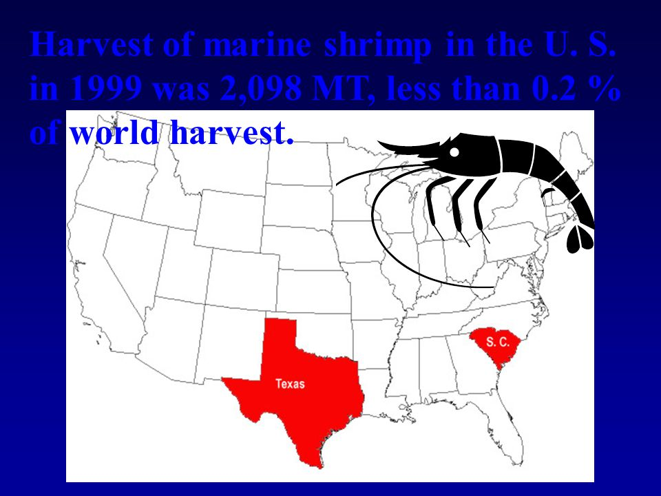 Harvest of marine shrimp in the U. S. in 1999 was 2,098 MT, less than 0.2 % of world harvest.