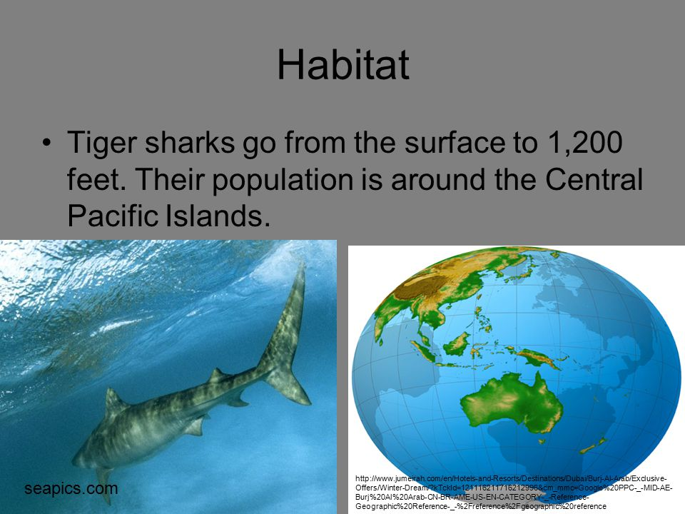 Habitat Tiger sharks go from the surface to 1,200 feet. Their population is around the Central Pacific Islands. seapics.com http://www.jumeirah.com/en