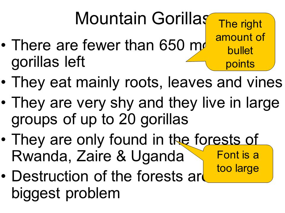 Mountain Gorillas There are fewer than 650 mountain gorillas left They eat mainly roots, leaves and vines They are very shy and they live in large groups of up to 20 gorillas They are only found in the forests of Rwanda, Zaire & Uganda Destruction of the forests are the biggest problem The right amount of bullet points Font is a too large