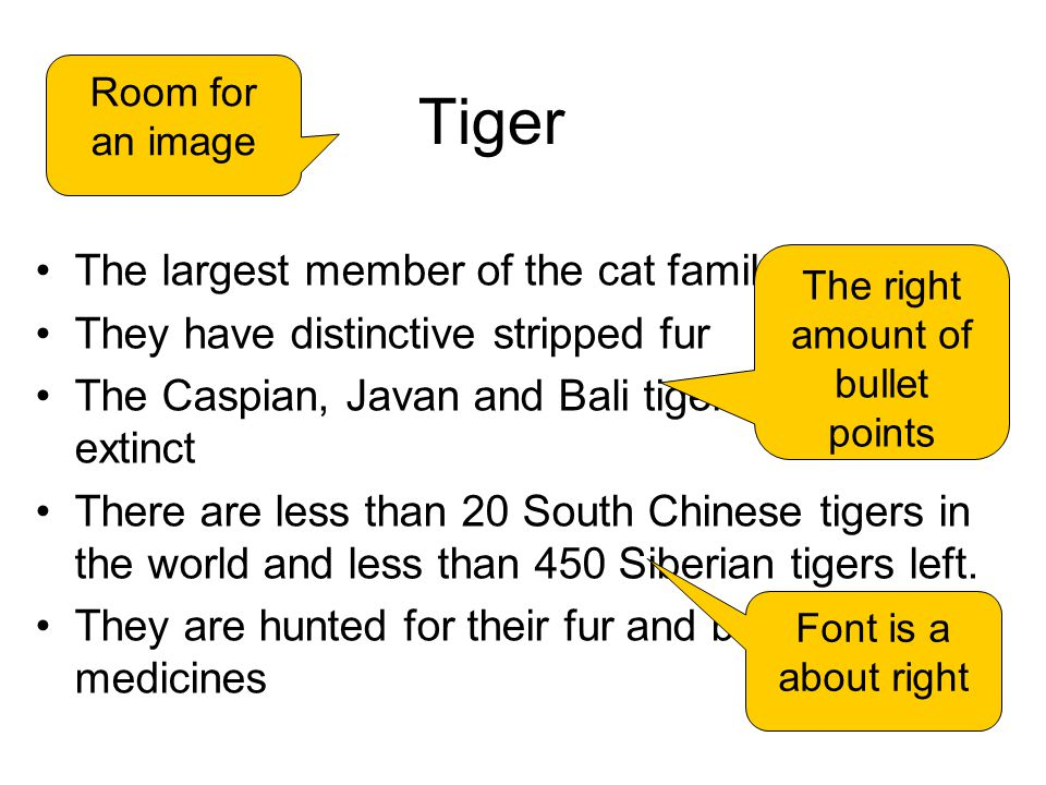Tiger The largest member of the cat family They have distinctive stripped fur The Caspian, Javan and Bali tigers are already extinct There are less than 20 South Chinese tigers in the world and less than 450 Siberian tigers left.