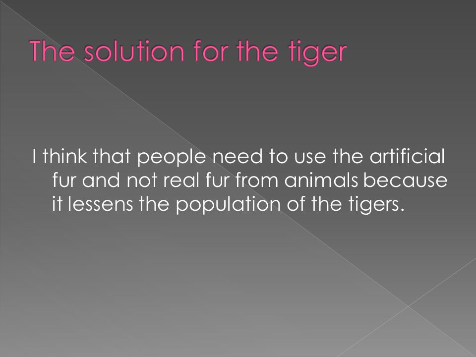 The tiger is in danger because there are some men that kill the tiger and take his fur because the fur is beautiful and very soft.They take the fur and make track suits and coats and people buy this and the men s benefits money and there is no tigers anymore.