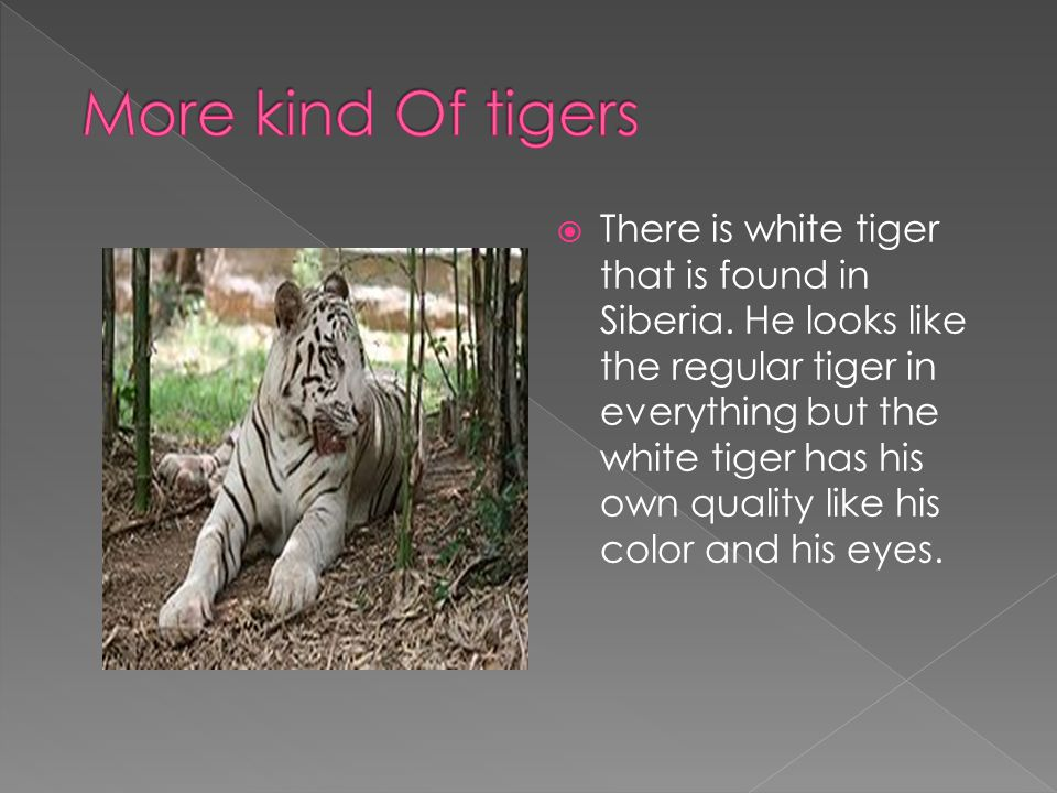  There is white tiger that is found in Siberia.