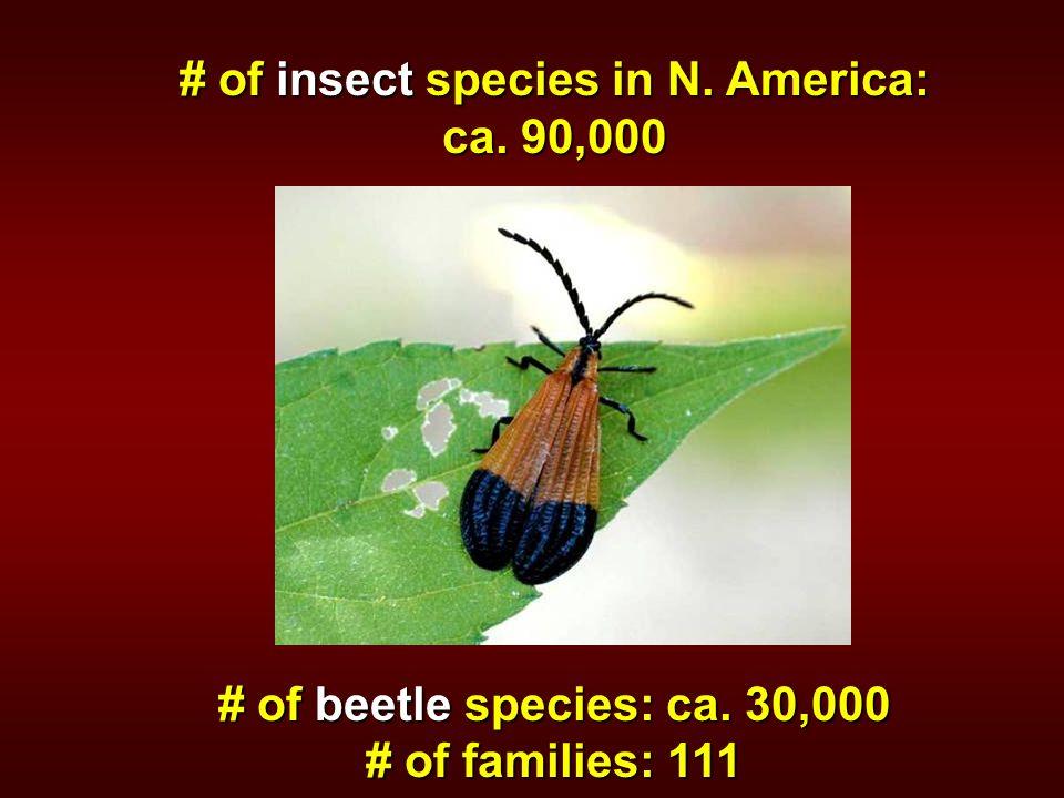 # of insect species in N. America: ca. 90,000 # of beetle species: ca. 30,000 # of families: 111