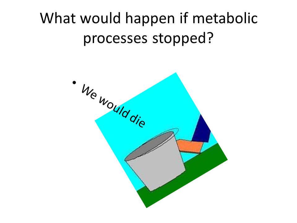 What would happen if metabolic processes stopped We would die