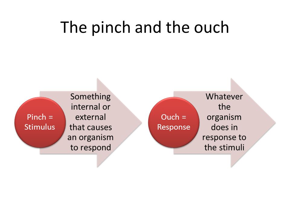 The pinch and the ouch Something internal or external that causes an organism to respond Pinch = Stimulus Whatever the organism does in response to the stimuli Ouch = Response