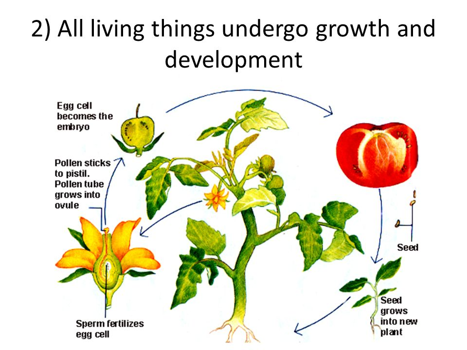 2) All living things undergo growth and development