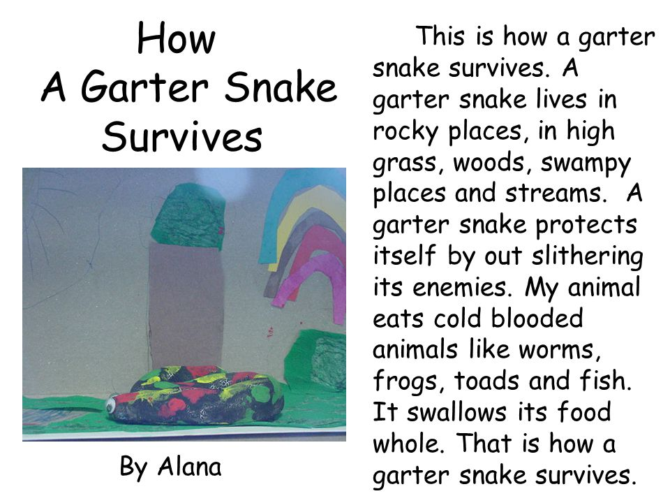 How A Garter Snake Survives This is how a garter snake survives. A garter snake lives in rocky places, in high grass, woods, swampy places and streams