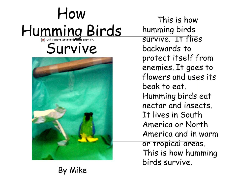 How Humming Birds Survive This is how humming birds survive. It flies backwards to protect itself from enemies. It goes to flowers and uses its beak t