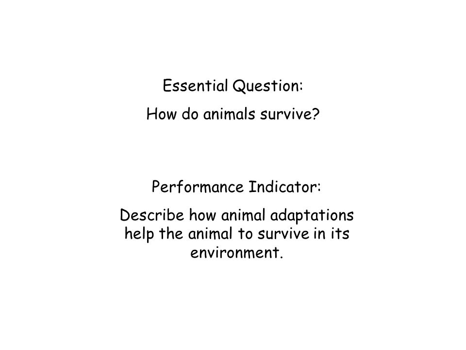 Essential Question: How do animals survive? Performance Indicator: Describe how animal adaptations help the animal to survive in its environment.