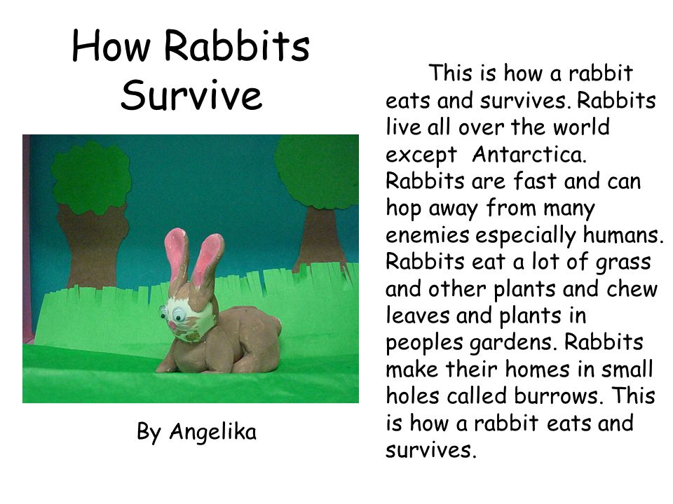 How Rabbits Survive This is how a rabbit eats and survives. Rabbits live all over the world except Antarctica. Rabbits are fast and can hop away from