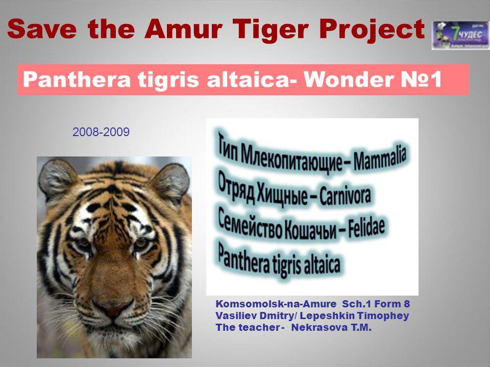 Panthera tigris altaica- Wonder №1 Komsomolsk-na-Amure Sch.1 Form 8 Vasiliev Dmitry/ Lepeshkin Timophey The teacher - Nekrasova T.M. Save the Amur Tig