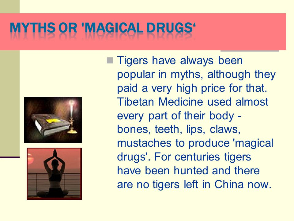 Tigers have always been popular in myths, although they paid а very high price for that. Tibetan Medicine used almost every part of their body - bones