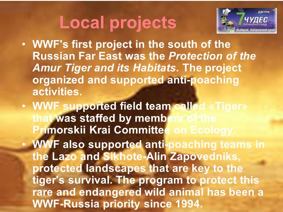 WWF's first project in the south of the Russian Far East was the Protection of the Amur Tiger and its Habitats. The project organized and supported an