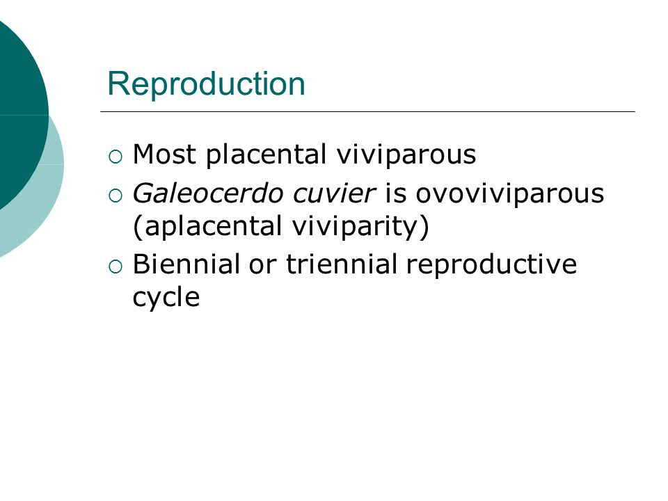 Reproduction  Most placental viviparous  Galeocerdo cuvier is ovoviviparous (aplacental viviparity)  Biennial or triennial reproductive cycle