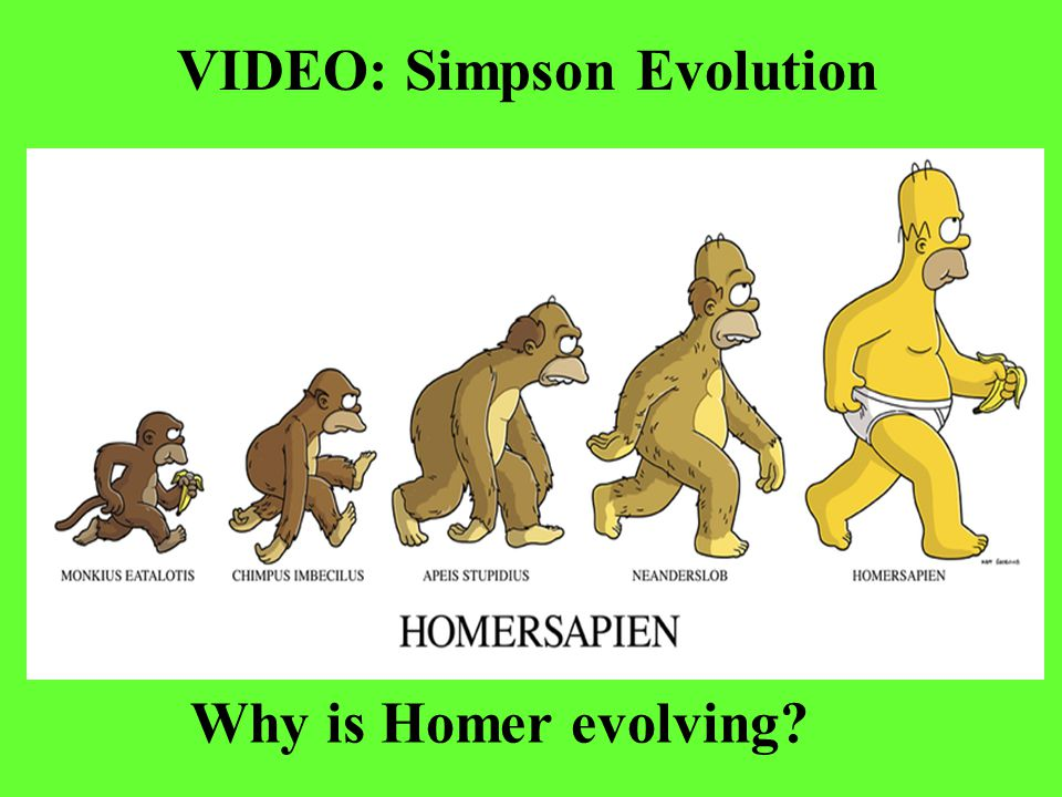 VIDEO: Simpson Evolution Why is Homer evolving?