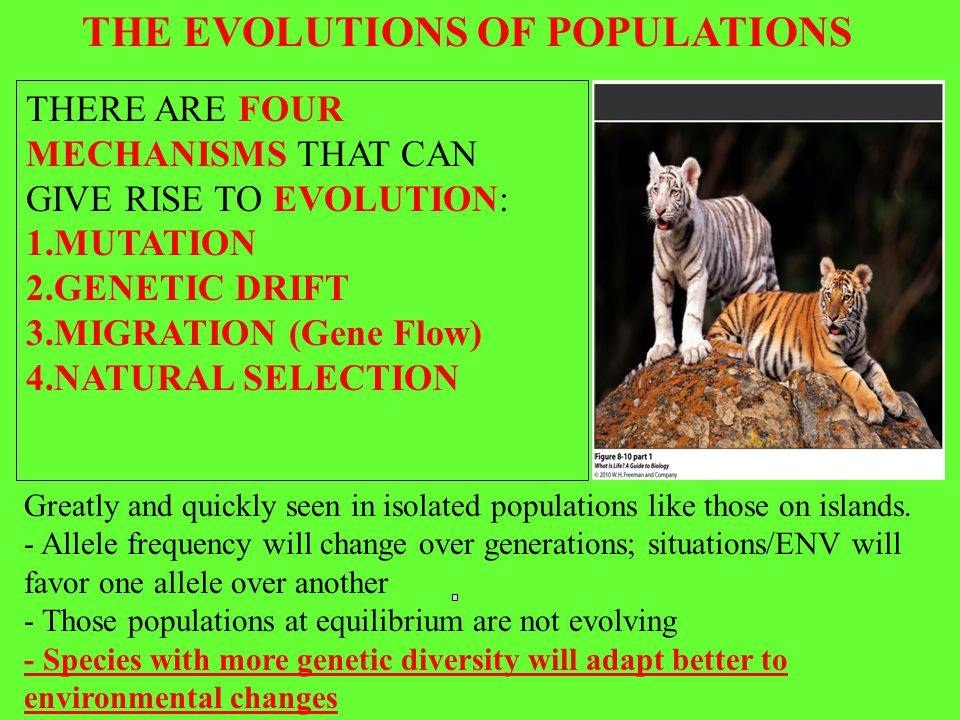 THE EVOLUTIONS OF POPULATIONS THERE ARE FOUR MECHANISMS THAT CAN GIVE RISE TO EVOLUTION: 1.MUTATION 2.GENETIC DRIFT 3.MIGRATION (Gene Flow) 4.NATURAL