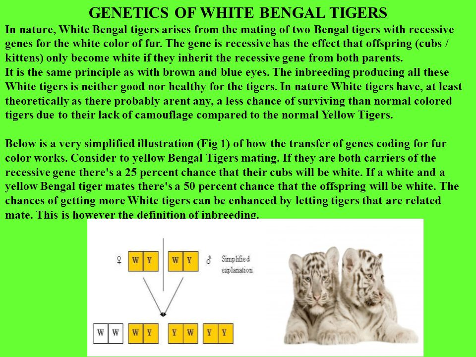 TIGER POPULATION THE EVOLUTIONS OF POPULATIONS Proportion of orange fur- pigment alleles in the population Proportion of white fur- pigment alleles in the population Allele frequencies: Evolution is a change in the allele frequencies of a population over time.