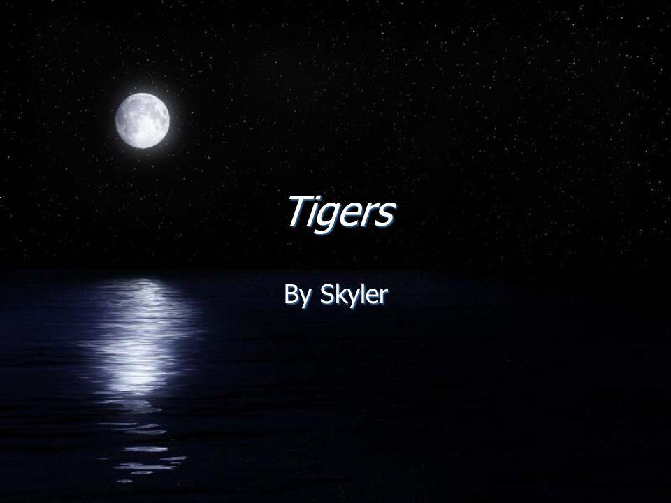 Tigers By Skyler