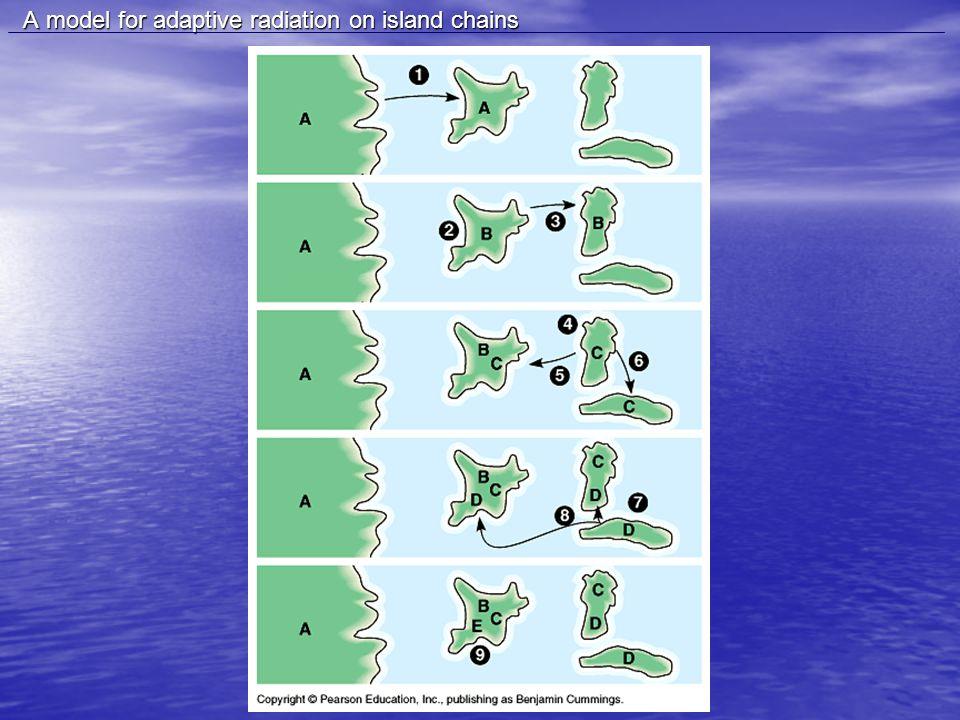 A model for adaptive radiation on island chains A model for adaptive radiation on island chains
