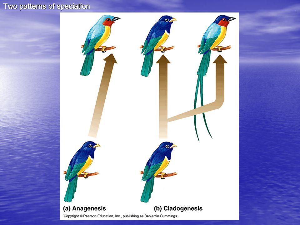 Adaptive Radiation of Galapagos Finches