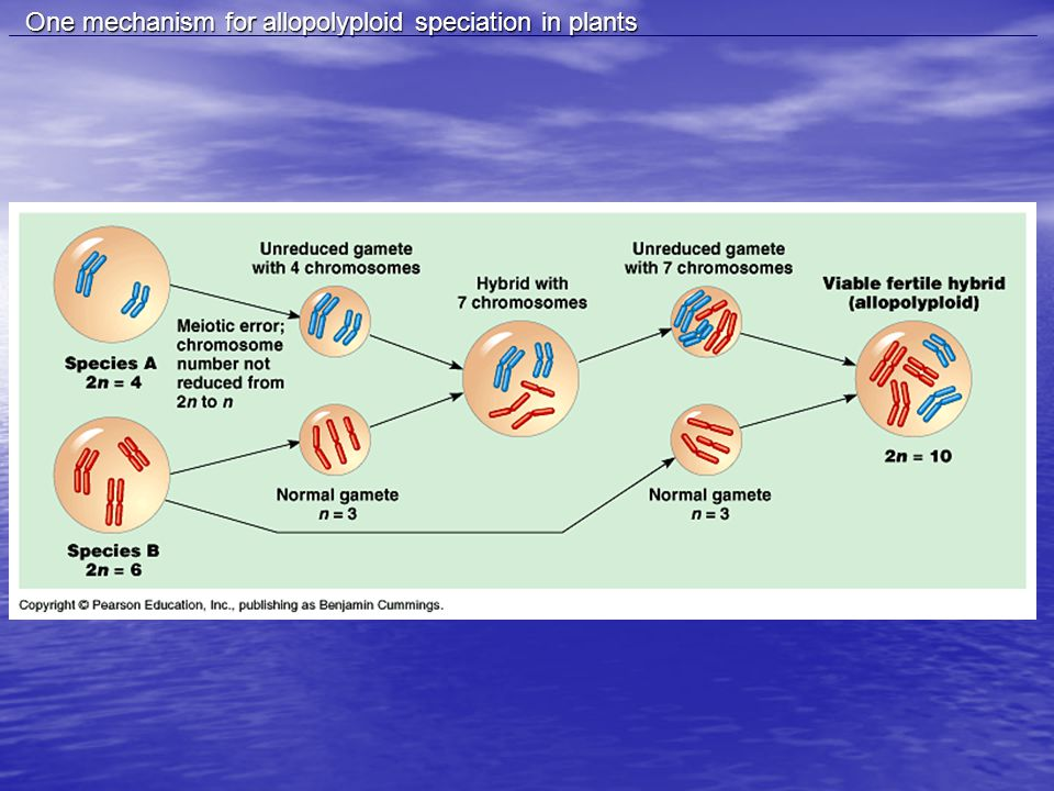 One mechanism for allopolyploid speciation in plants One mechanism for allopolyploid speciation in plants