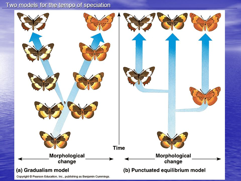 Two models for the tempo of speciation Two models for the tempo of speciation