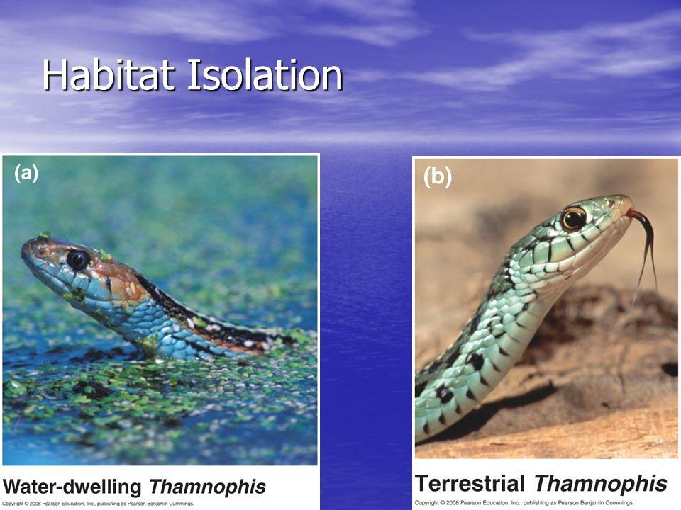 Habitat Isolation