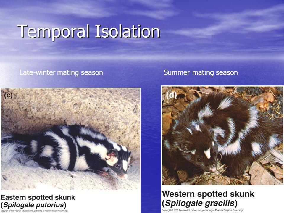 Temporal Isolation Late-winter mating seasonSummer mating season