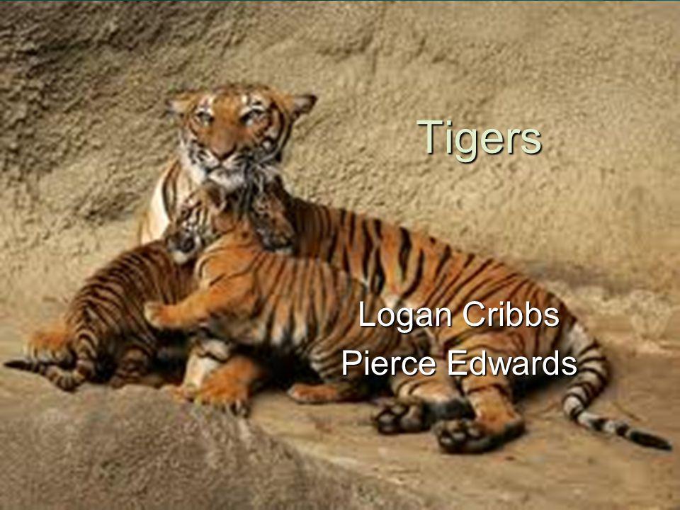 Tigers Logan Cribbs Pierce Edwards
