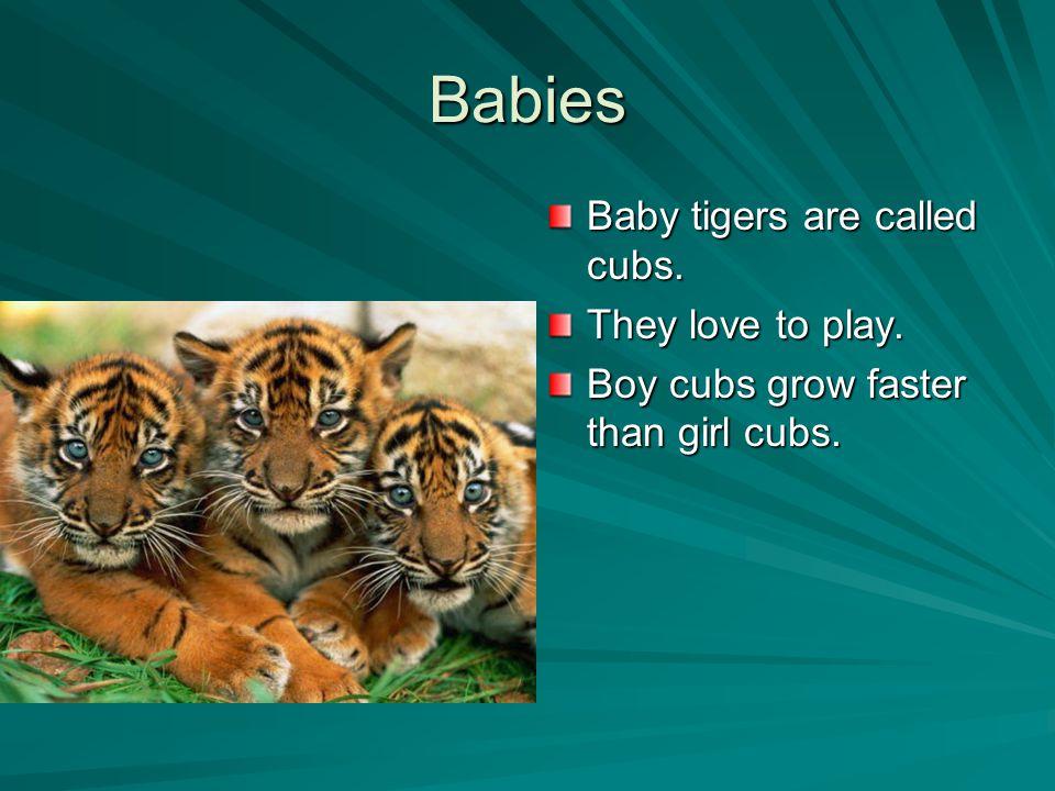 Appearance All tigers have black stripes.Most tigers have orange fur.