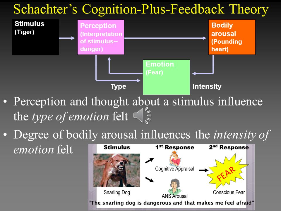 Schachter's Cognition-Plus-Feedback Theory Perception and thought about a stimulus influence the type of emotion felt Degree of bodily arousal influences the intensity of emotion felt Type Intensity Emotion (Fear) Perception (Interpretation of stimulus-- danger) Stimulus (Tiger) Bodily arousal (Pounding heart)