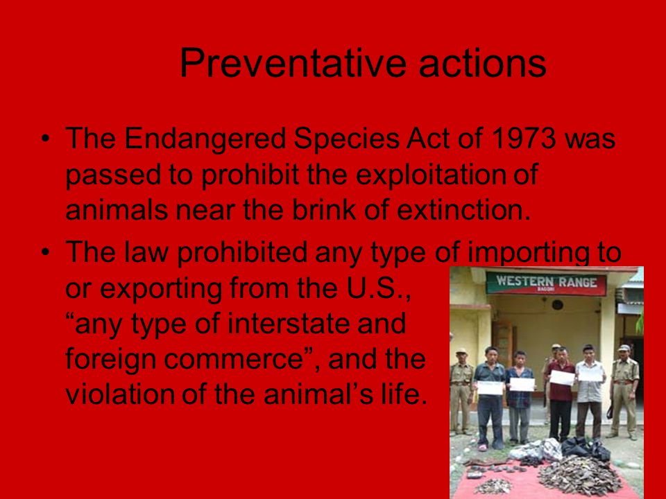 Preventative actions The Endangered Species Act of 1973 was passed to prohibit the exploitation of animals near the brink of extinction.