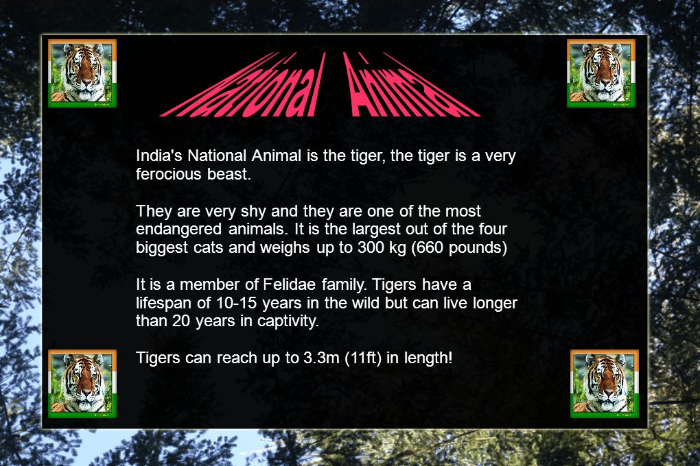 India s National Animal is the tiger, the tiger is a very ferocious beast.