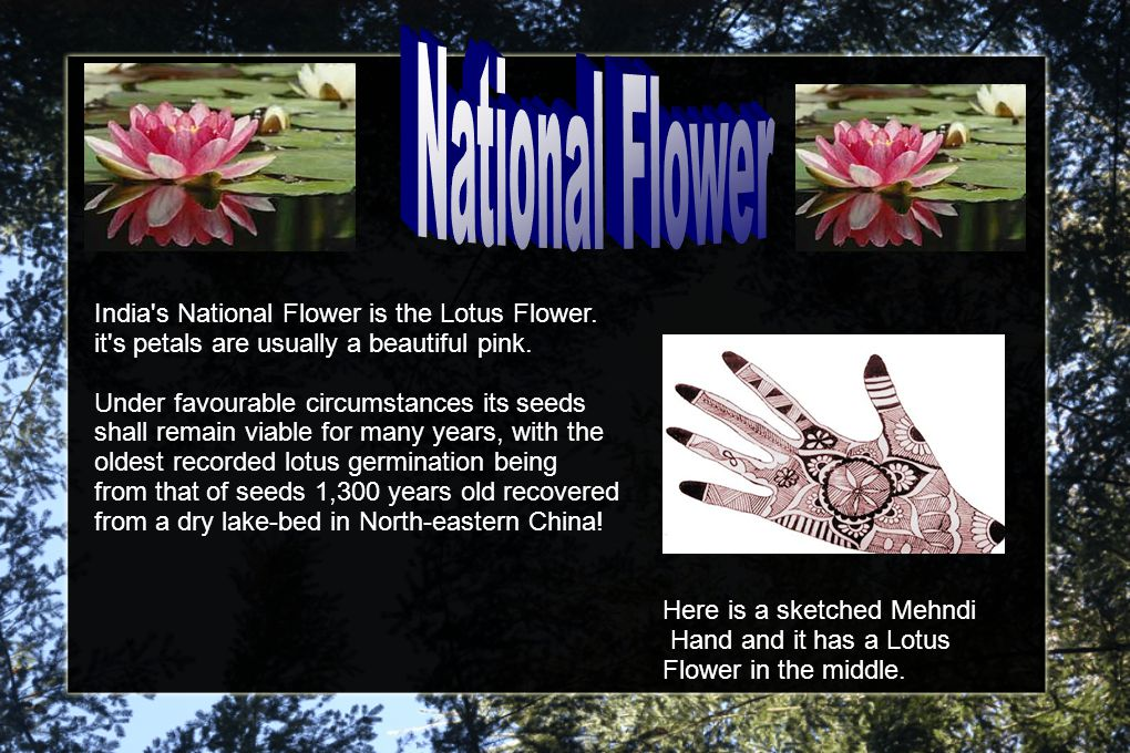 India s National Flower is the Lotus Flower. it s petals are usually a beautiful pink.