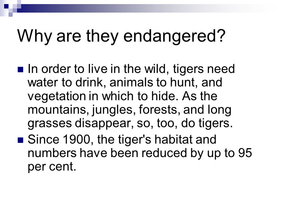 Why are they endangered? In order to live in the wild, tigers need water to drink, animals to hunt, and vegetation in which to hide. As the mountains,
