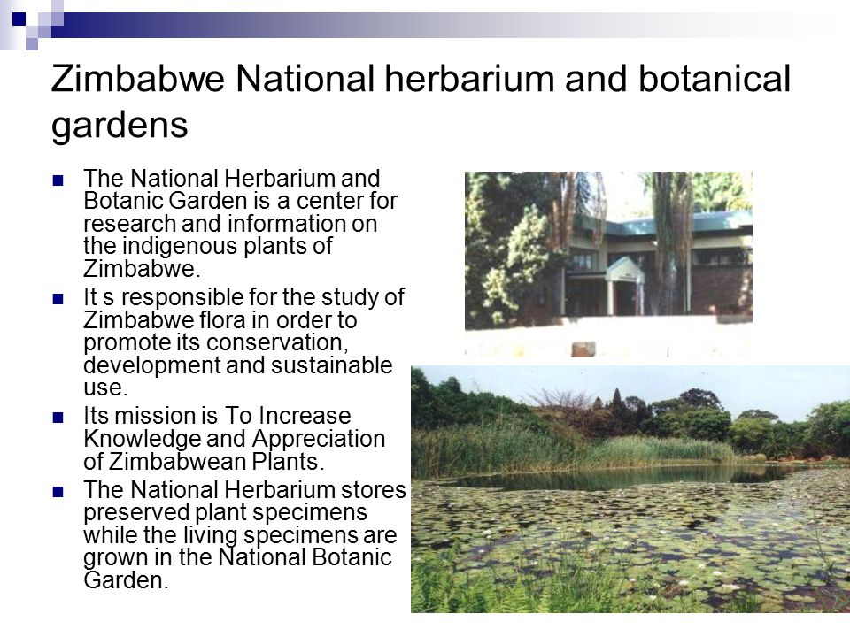 Zimbabwe National herbarium and botanical gardens The National Herbarium and Botanic Garden is a center for research and information on the indigenous