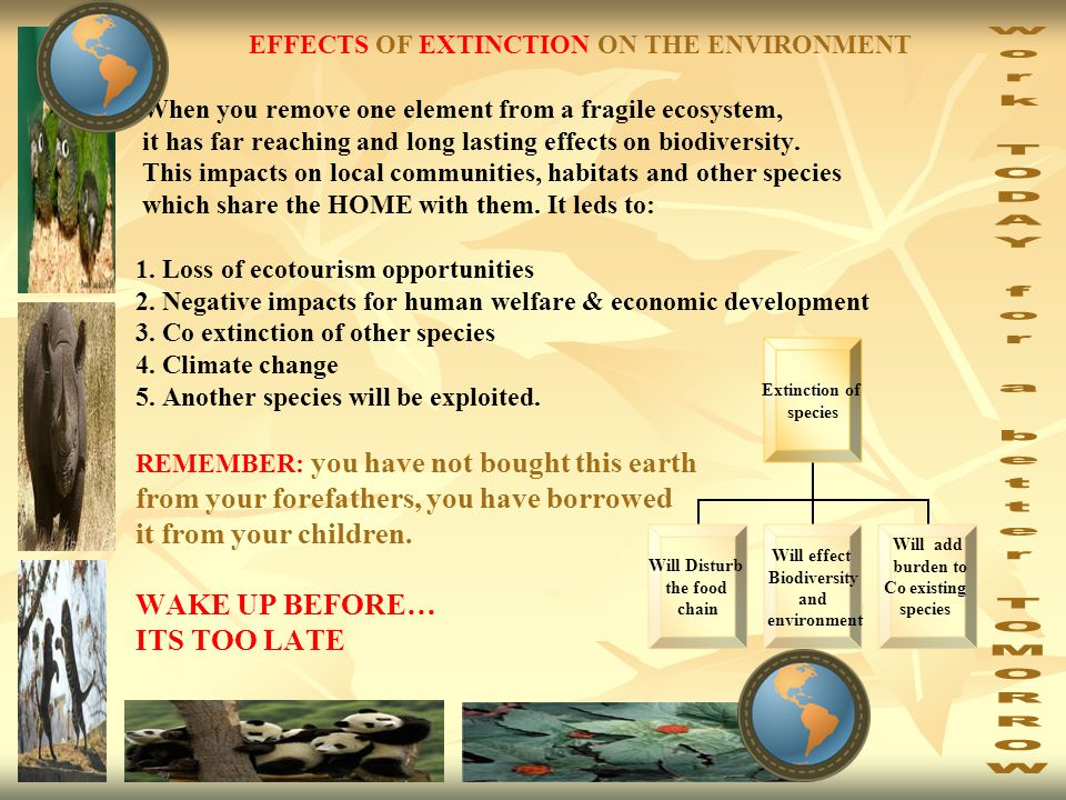 EFFECTS OF EXTINCTION ON THE ENVIRONMENT When you remove one element from a fragile ecosystem, it has far reaching and long lasting effects on biodiversity.