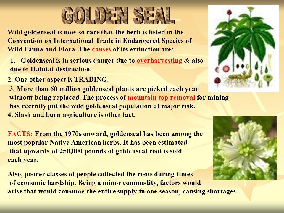 1.Goldenseal is in serious danger due to overharvesting & alsooverharvesting due to Habitat destruction.