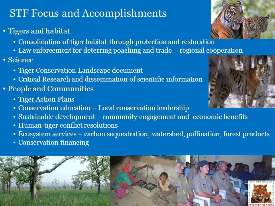 STF Focus and Accomplishments Tigers and habitat Consolidation of tiger habitat through protection and restoration Law enforcement for deterring poach