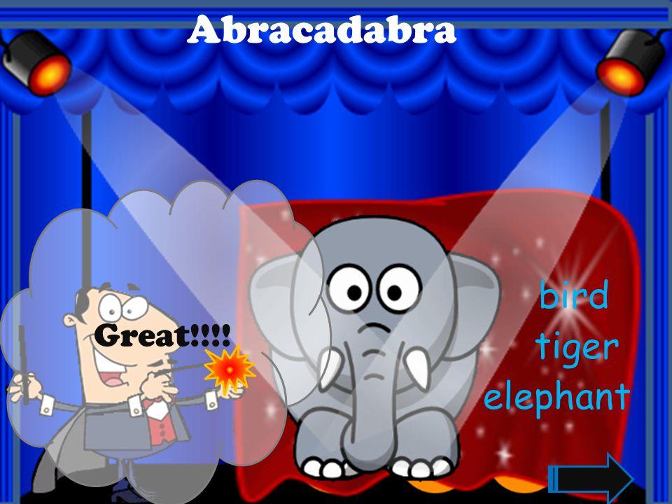 Great!!!! Abracadabra rabbit dog hippo