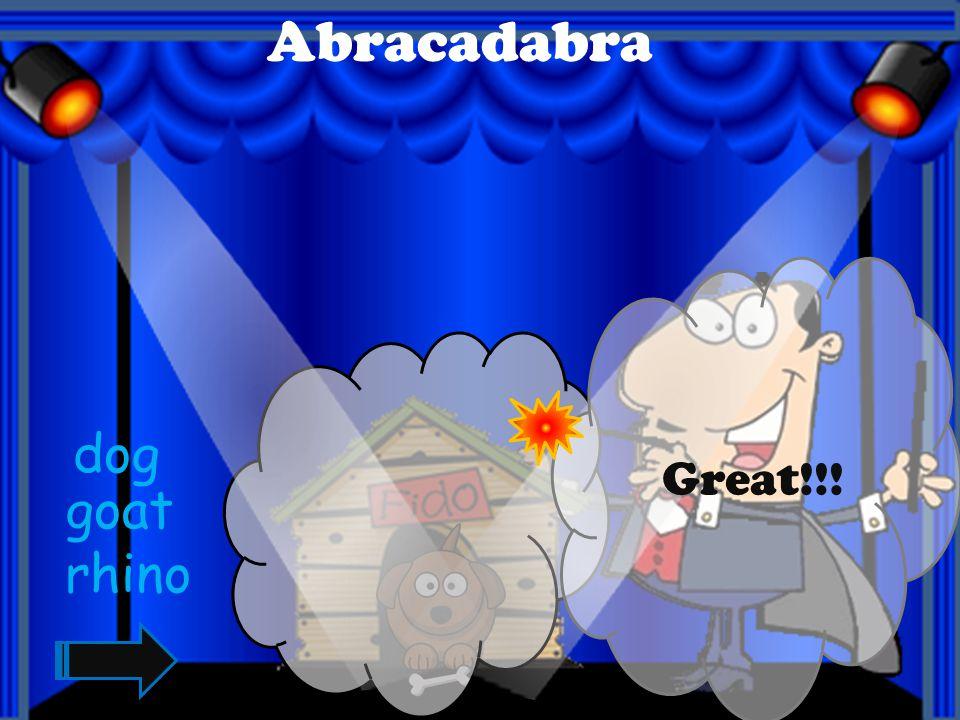Abracadabra Great!!!! tiger bird elephant
