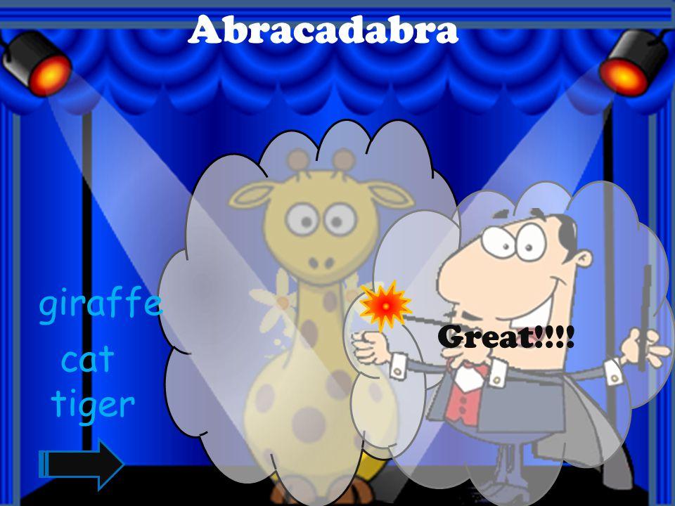 Abracadabra Great!!!! cat penguin tiger