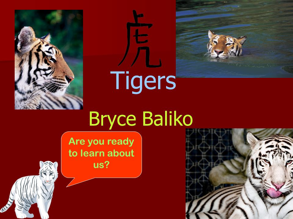 Tigers Bryce Baliko Are you ready to learn about us