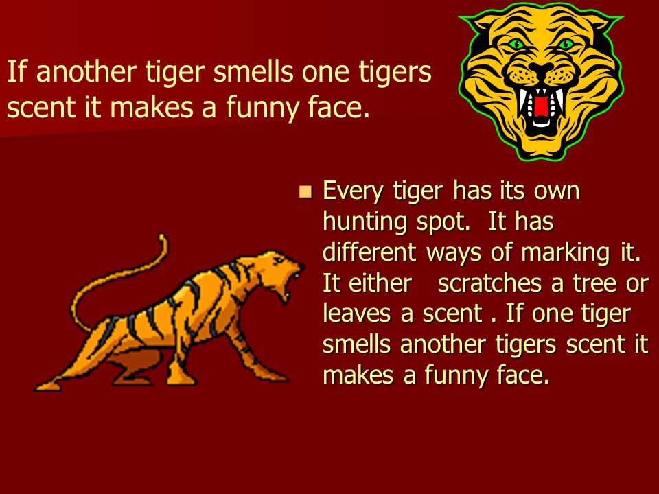 Every tiger has its own hunting spot. It has different ways of marking it.