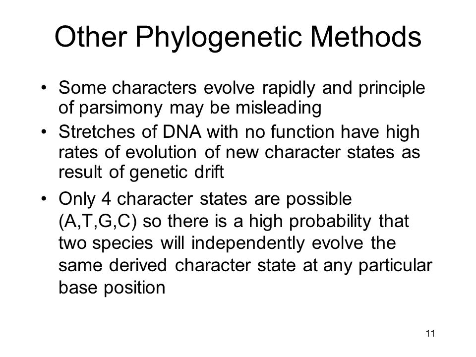Other Phylogenetic Methods Some characters evolve rapidly and principle of parsimony may be misleading Stretches of DNA with no function have high rat