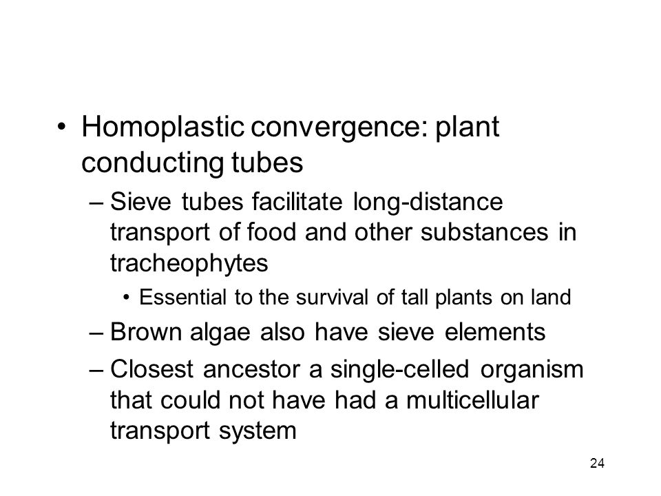 Homoplastic convergence: plant conducting tubes –Sieve tubes facilitate long-distance transport of food and other substances in tracheophytes Essentia