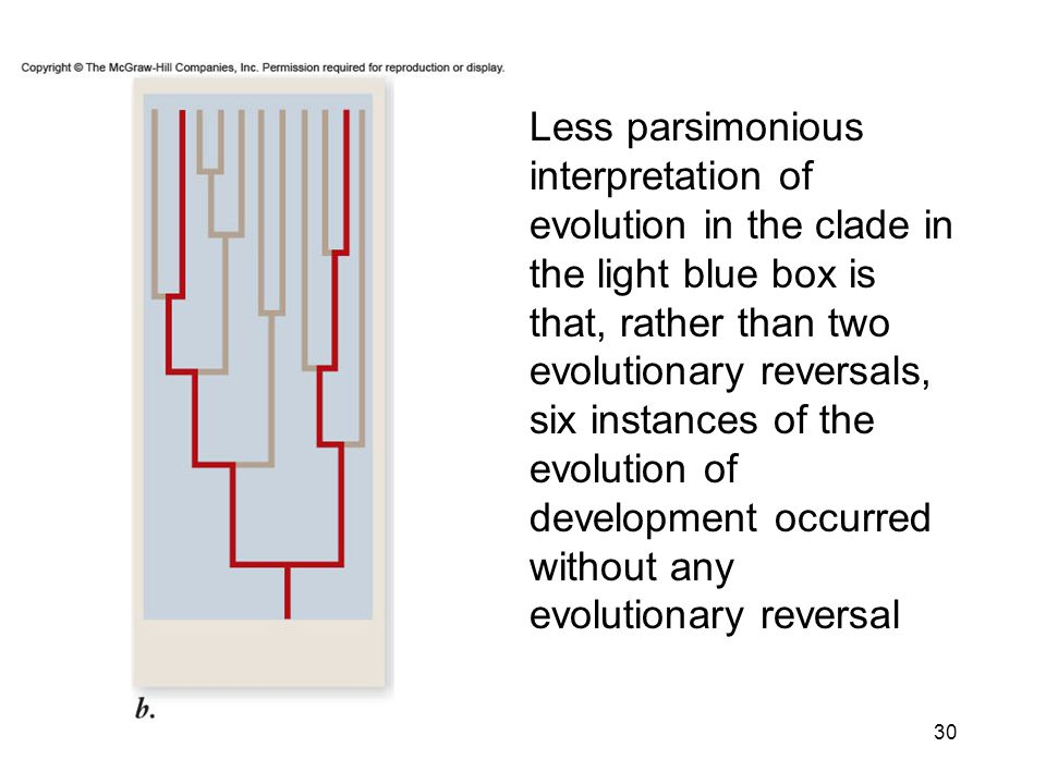 Less parsimonious interpretation of evolution in the clade in the light blue box is that, rather than two evolutionary reversals, six instances of the