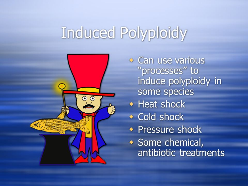 Induced Polyploidy  Can use various processes to induce polyploidy in some species  Heat shock  Cold shock  Pressure shock  Some chemical, antibiotic treatments